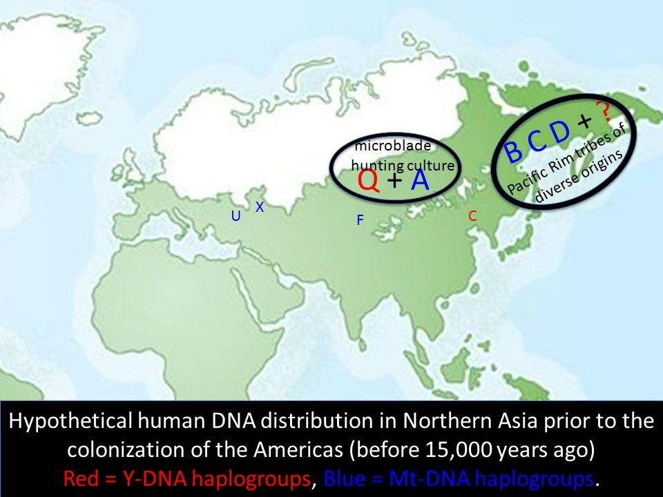 Red = Y-DNA haplogroups, Blue = Mt-DNA haplogroups.