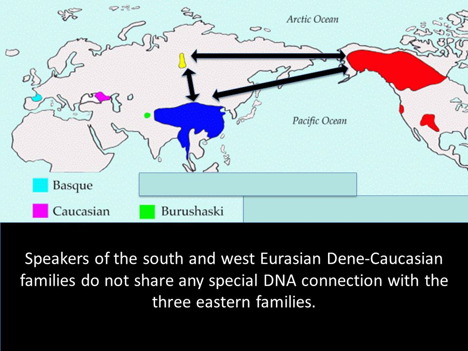 Speakers of the south and west Eurasian Dene-Caucasian families do not share any special DNA connection with the three eastern families.