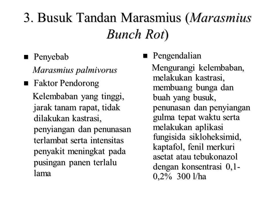 3. Busuk Tandan Marasmius (Marasmius Bunch Rot)