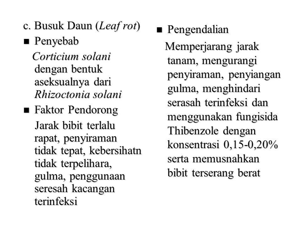 c. Busuk Daun (Leaf rot) Penyebab. Corticium solani dengan bentuk aseksualnya dari Rhizoctonia solani.