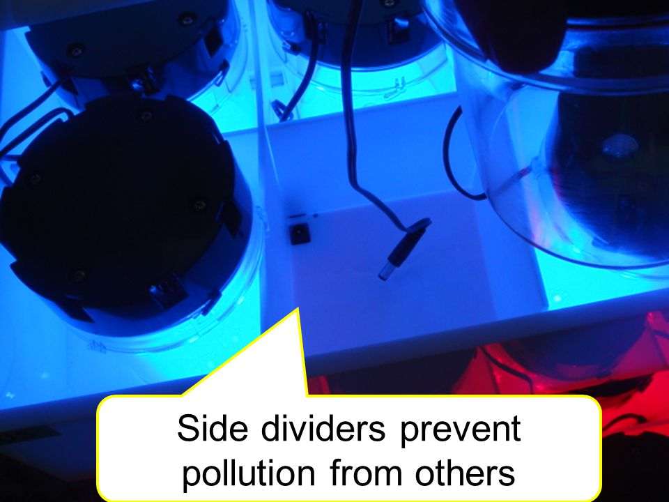 Side dividers prevent pollution from others