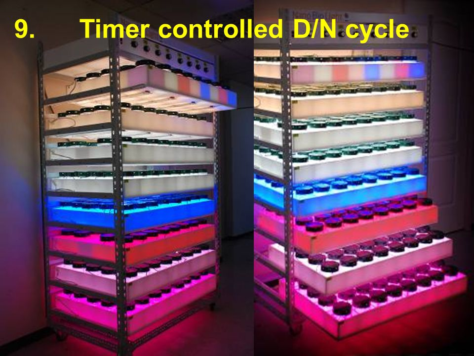 Timer controlled D/N cycle
