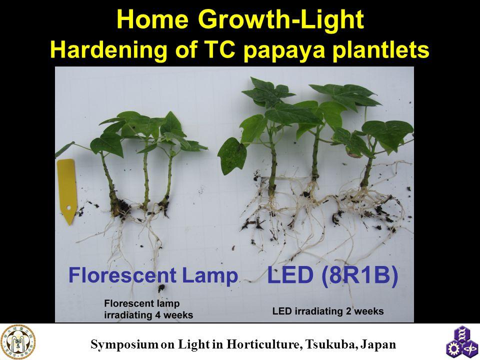Home Growth-Light Hardening of TC papaya plantlets