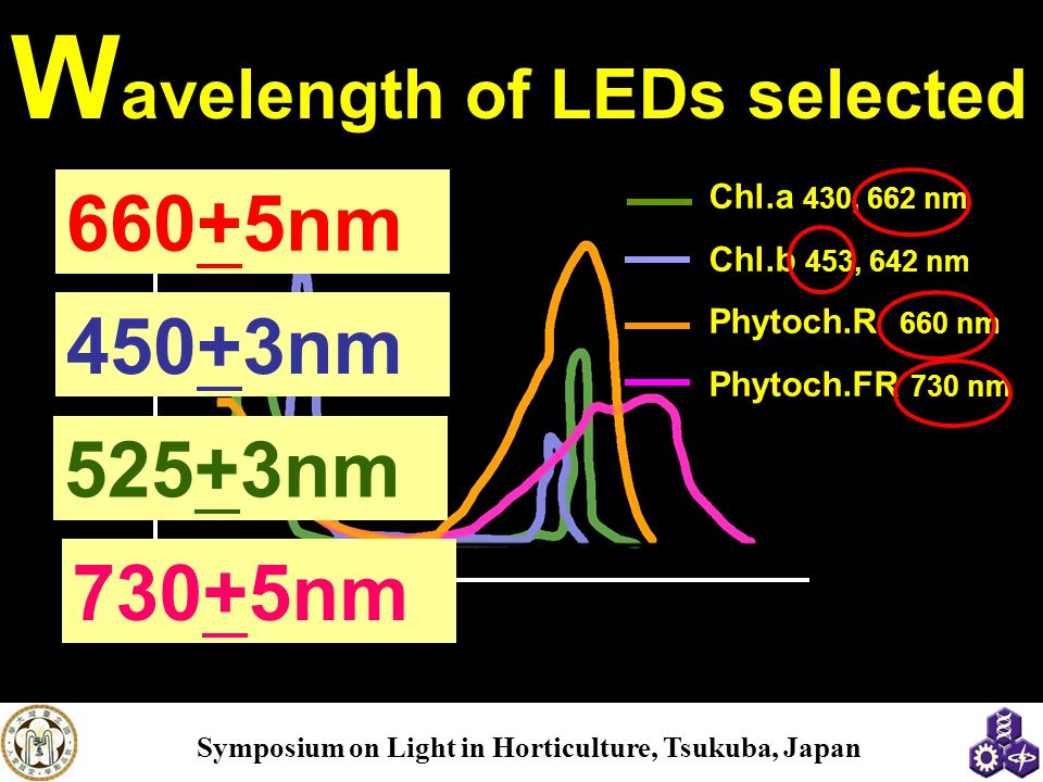 Absorption spectrums of chlorophyll and phytochrome