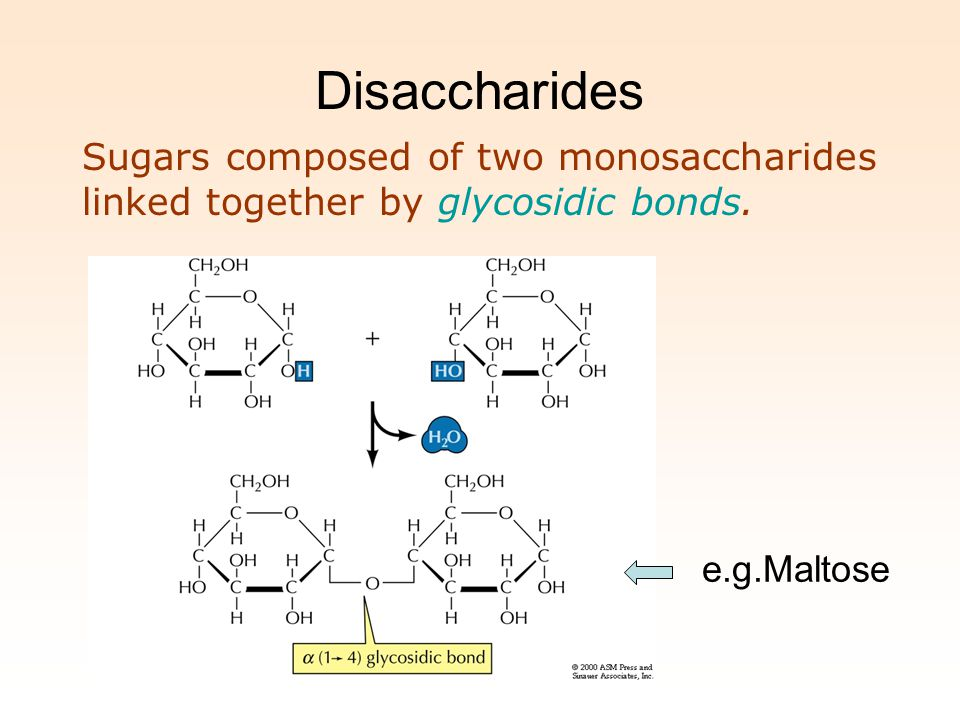 Disaccharides Sugars composed of two monosaccharides linked together by glycosidic bonds.
