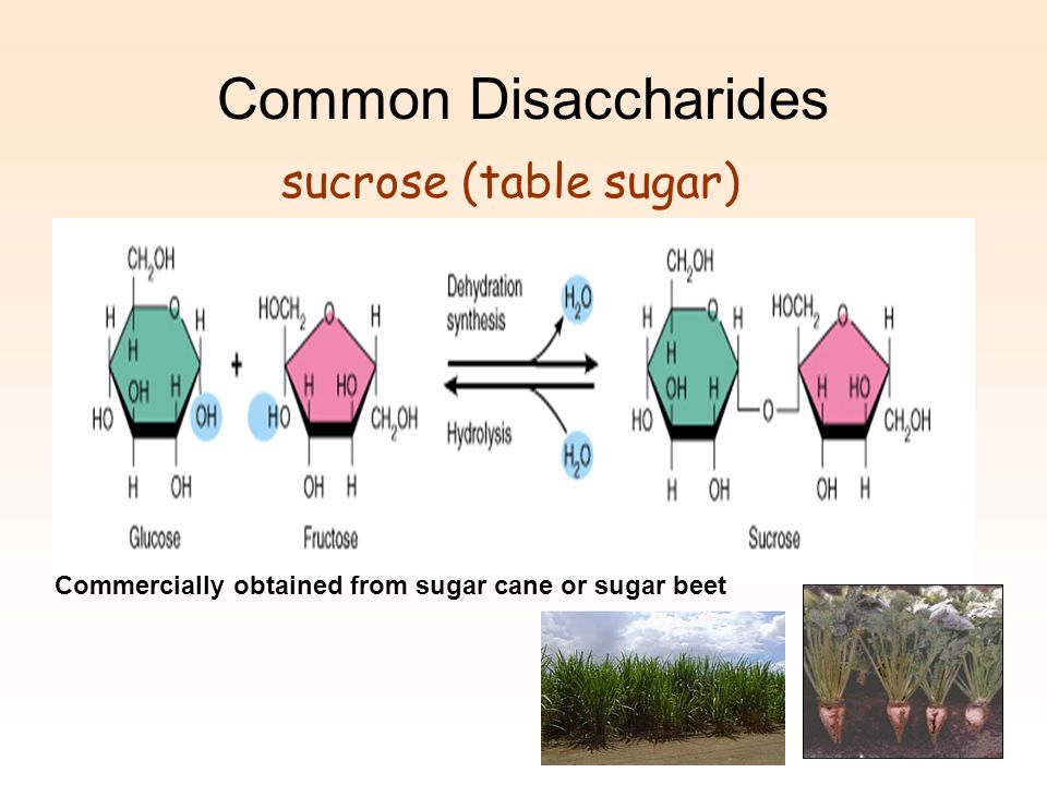 Common Disaccharides sucrose (table sugar)