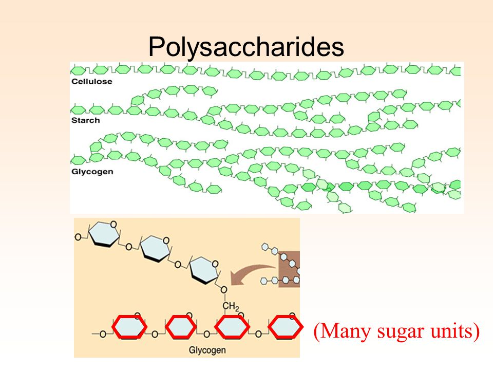 Polysaccharides (Many sugar units)