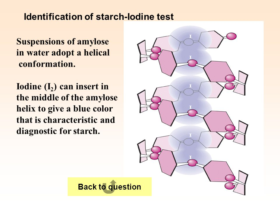 Identification of starch-Iodine test