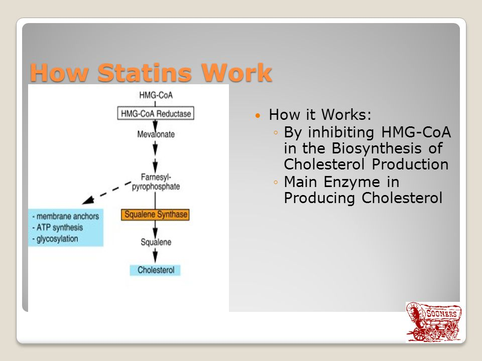 How Statins Work How it Works: