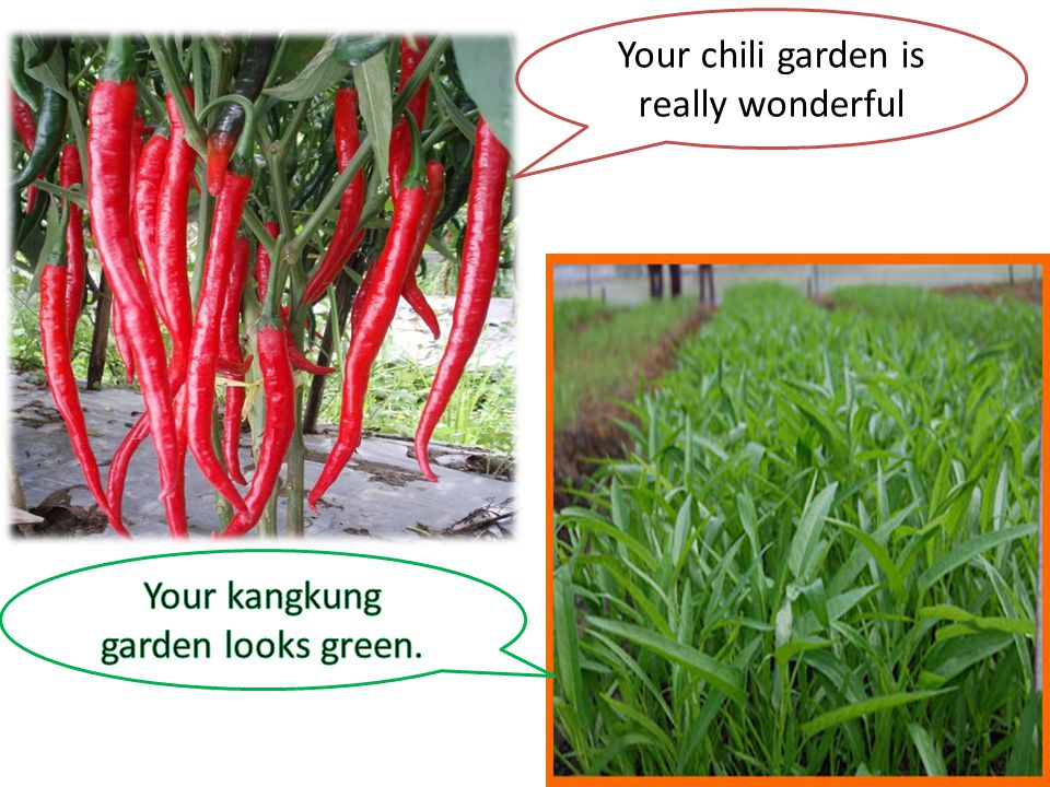 Your chili garden is really wonderful