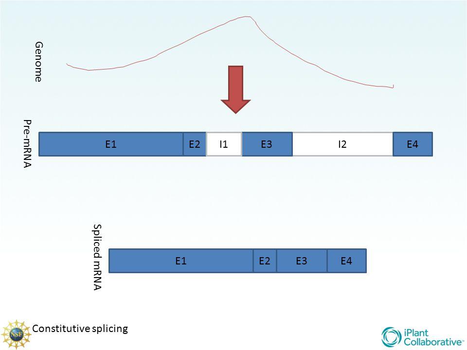 Genome Pre-mRNA E1 E2 I1 E3 I2 E4 Spliced mRNA E1 E2 E3 E4 Constitutive splicing