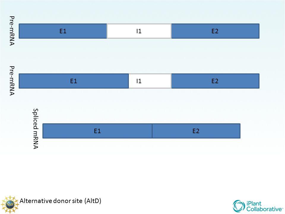 Pre-mRNA E1 I1 E2 Pre-mRNA E1 E1 I1 E2 Spliced mRNA E1 E2 Alternative donor site (AltD)
