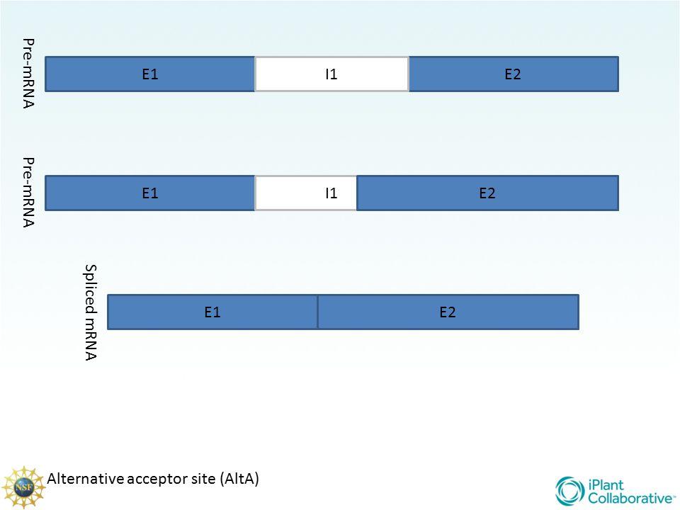 Pre-mRNA E1 I1 E2 Pre-mRNA E1 I1 E2 E2 Spliced mRNA E1 E2 Alternative acceptor site (AltA)