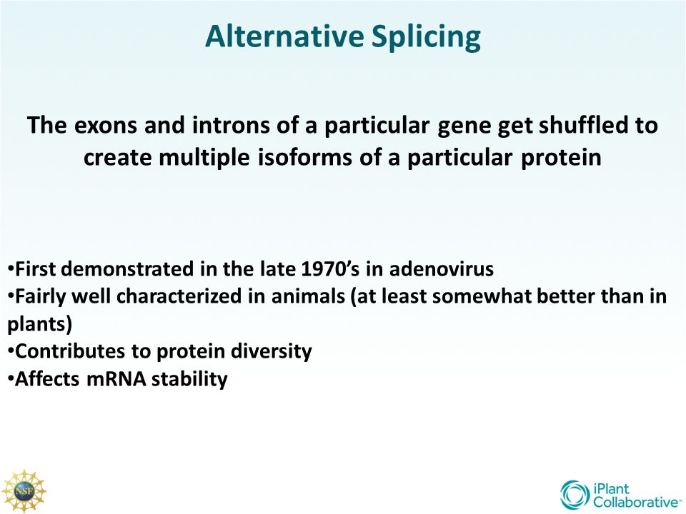 Alternative Splicing The exons and introns of a particular gene get shuffled to create multiple isoforms of a particular protein.