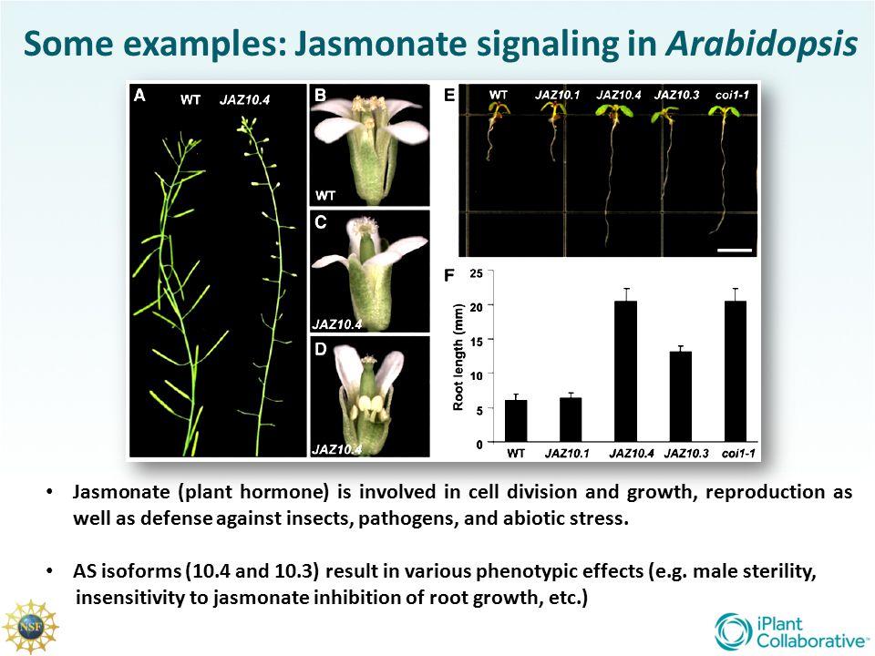 Some examples: Jasmonate signaling in Arabidopsis