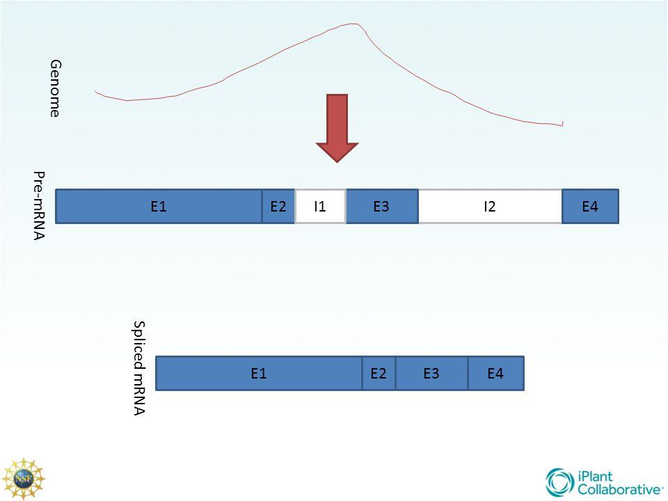 Genome Pre-mRNA E1 E2 I1 E3 I2 E4 Spliced mRNA E1 E2 E3 E4