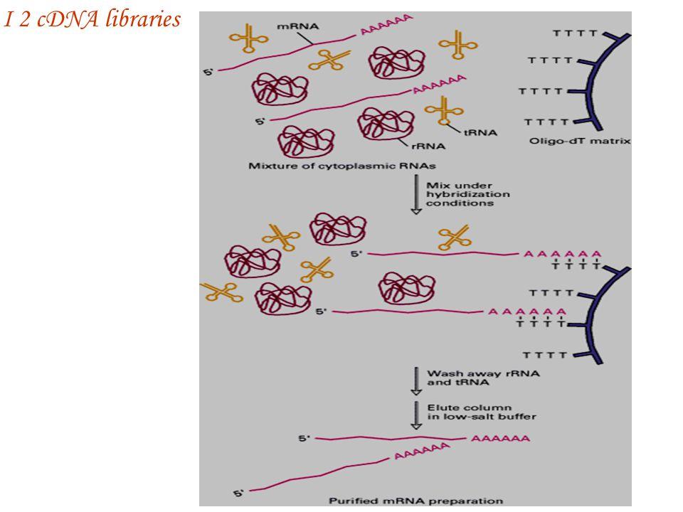 I 2 cDNA libraries