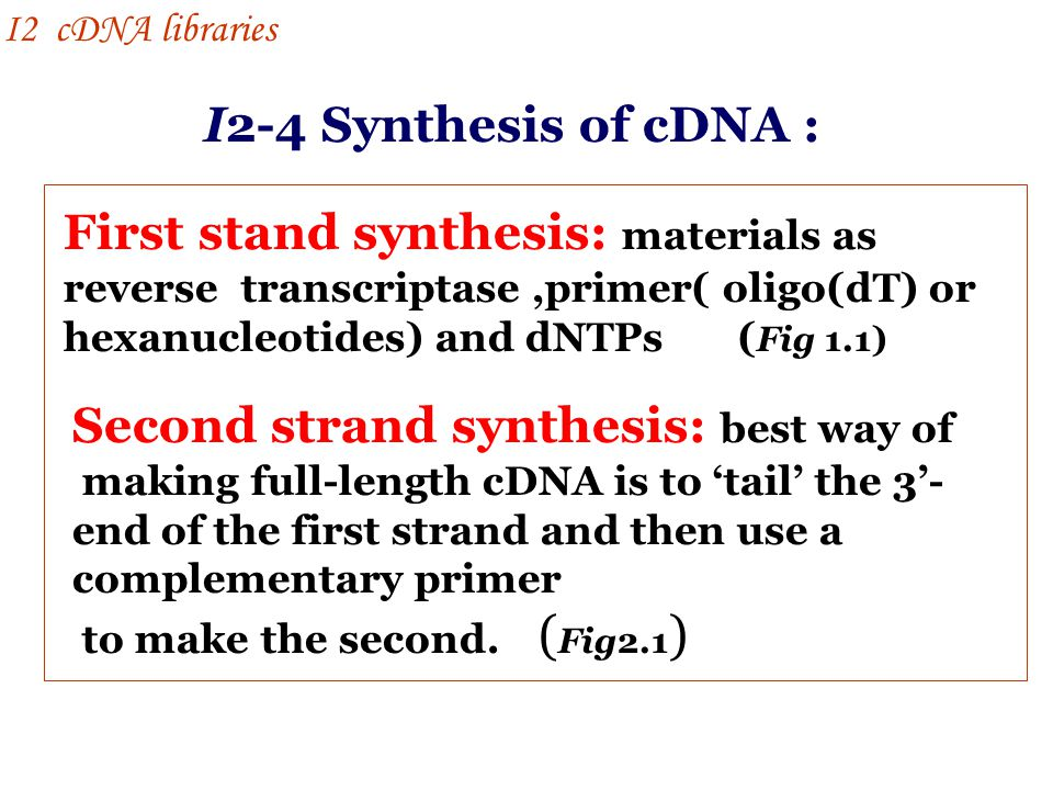 Second strand synthesis: best way of