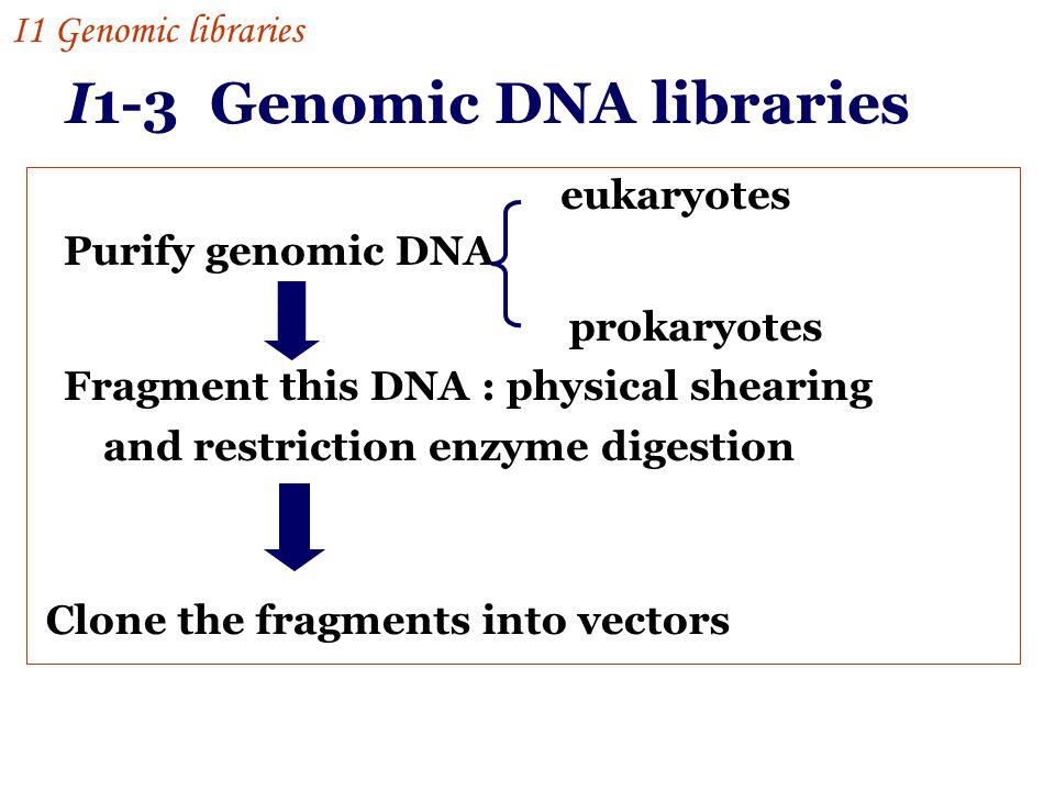 I1-3 Genomic DNA libraries