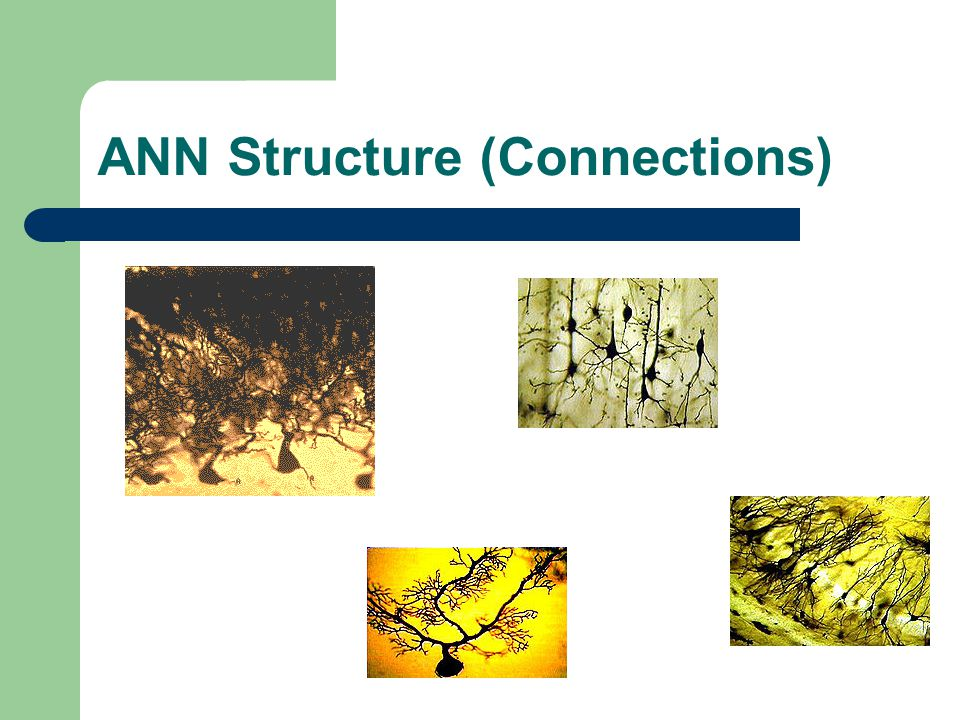 ANN Structure (Connections)