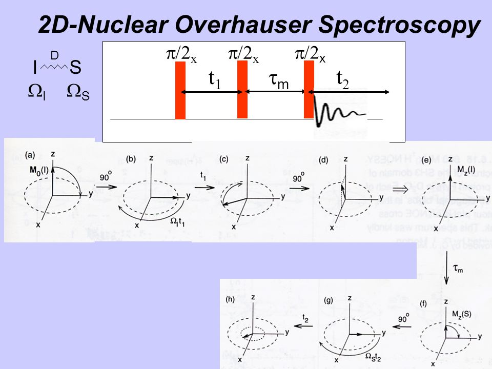 2D-Nuclear Overhauser Spectroscopy