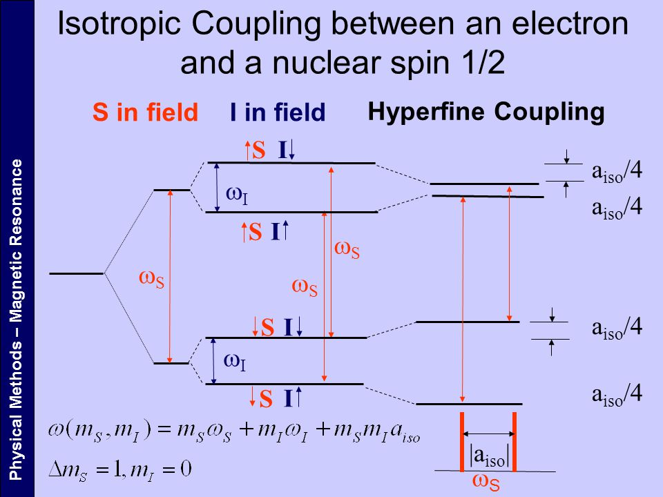 Isotropic Coupling between an electron and a nuclear spin 1/2