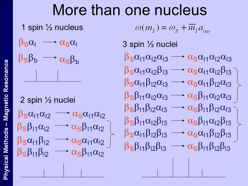 More than one nucleus aSaI bSaI bSbb aSbb bSaI1aI2aI3 aSaI1aI2aI3