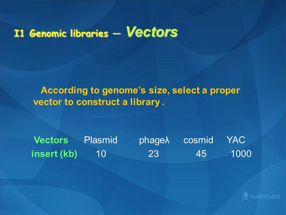 I1 Genomic libraries — Vectors