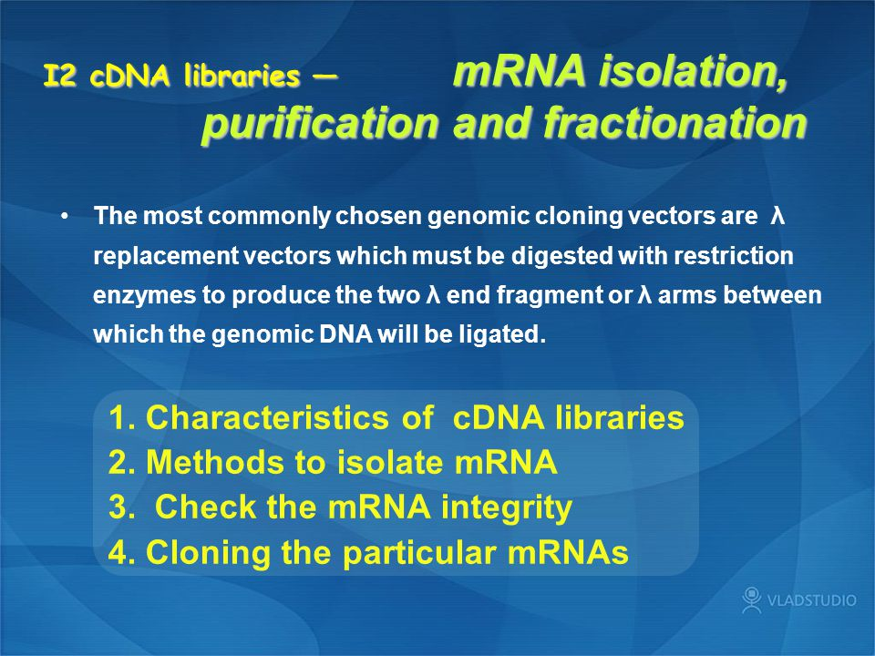 I2 cDNA libraries — mRNA isolation, purification and fractionation