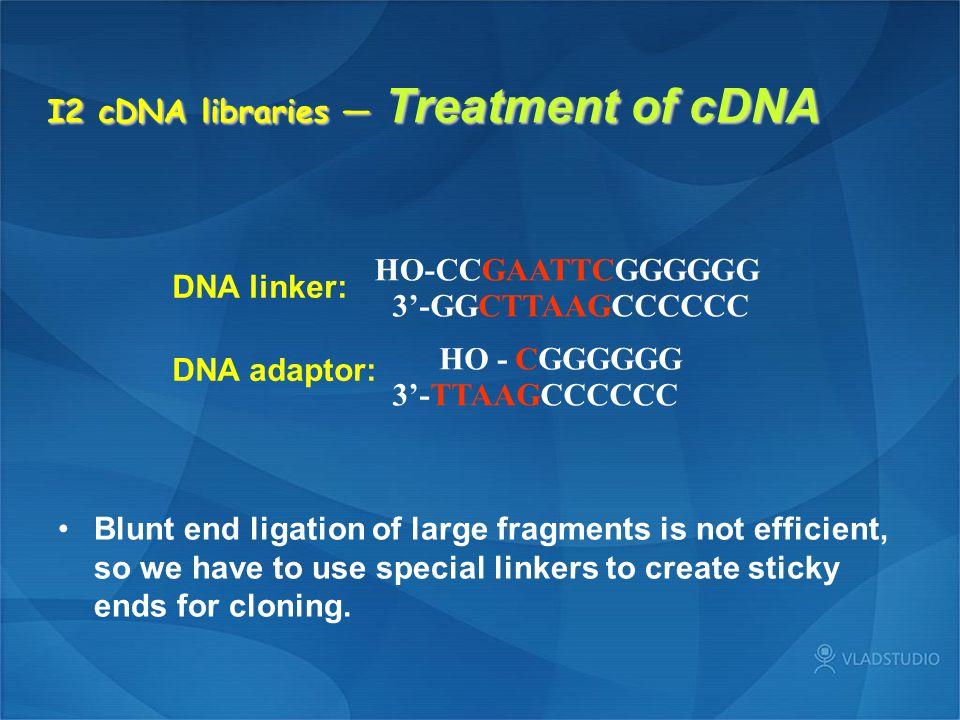 I2 cDNA libraries — Treatment of cDNA