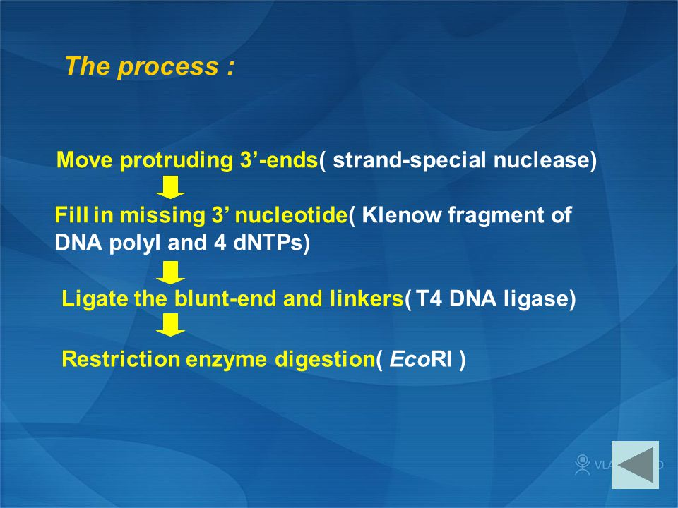 The process : Move protruding 3'-ends( strand-special nuclease)