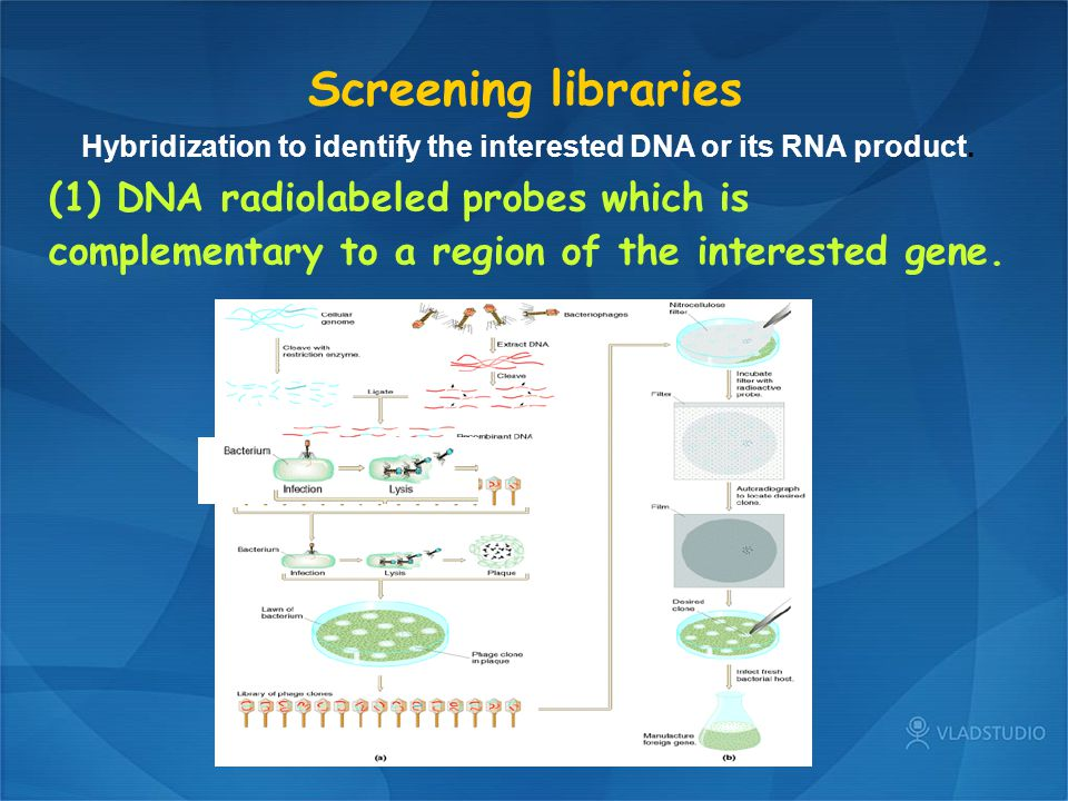 Screening libraries Hybridization to identify the interested DNA or its RNA product.