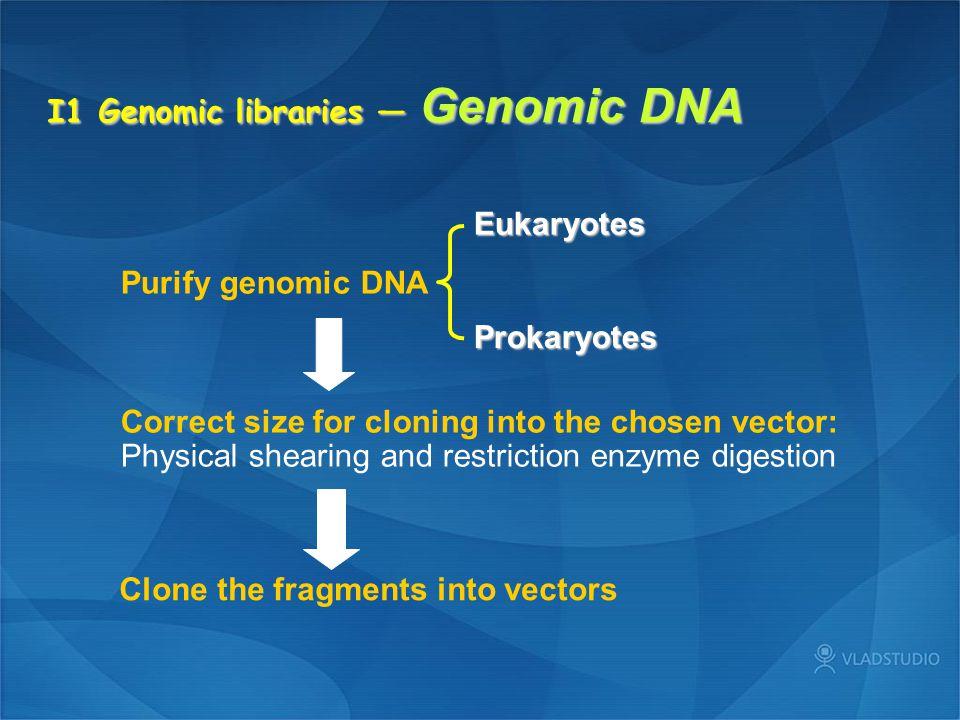 I1 Genomic libraries — Genomic DNA