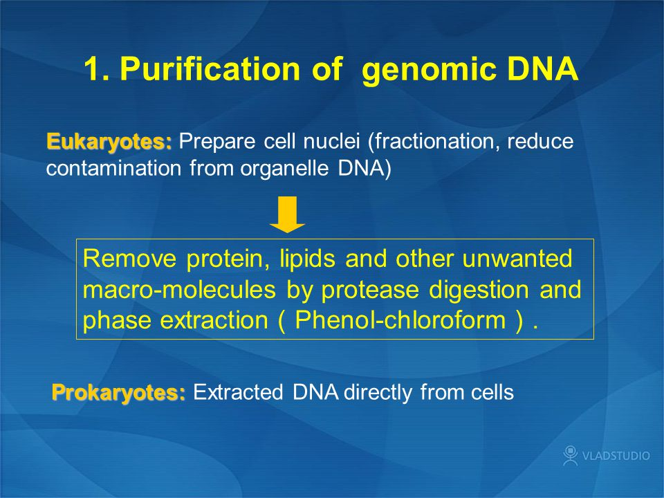 1. Purification of genomic DNA