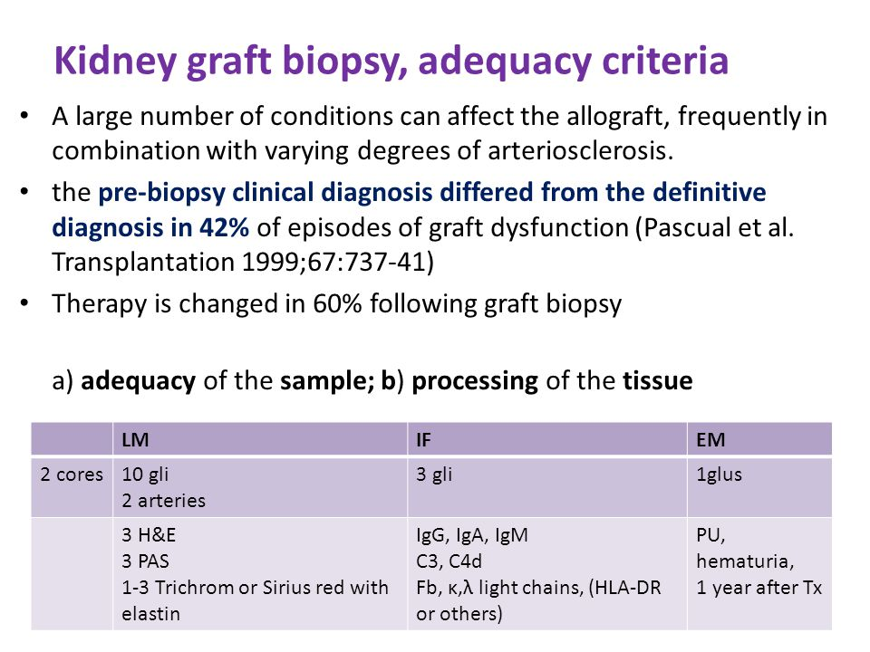 Kidney graft biopsy, adequacy criteria