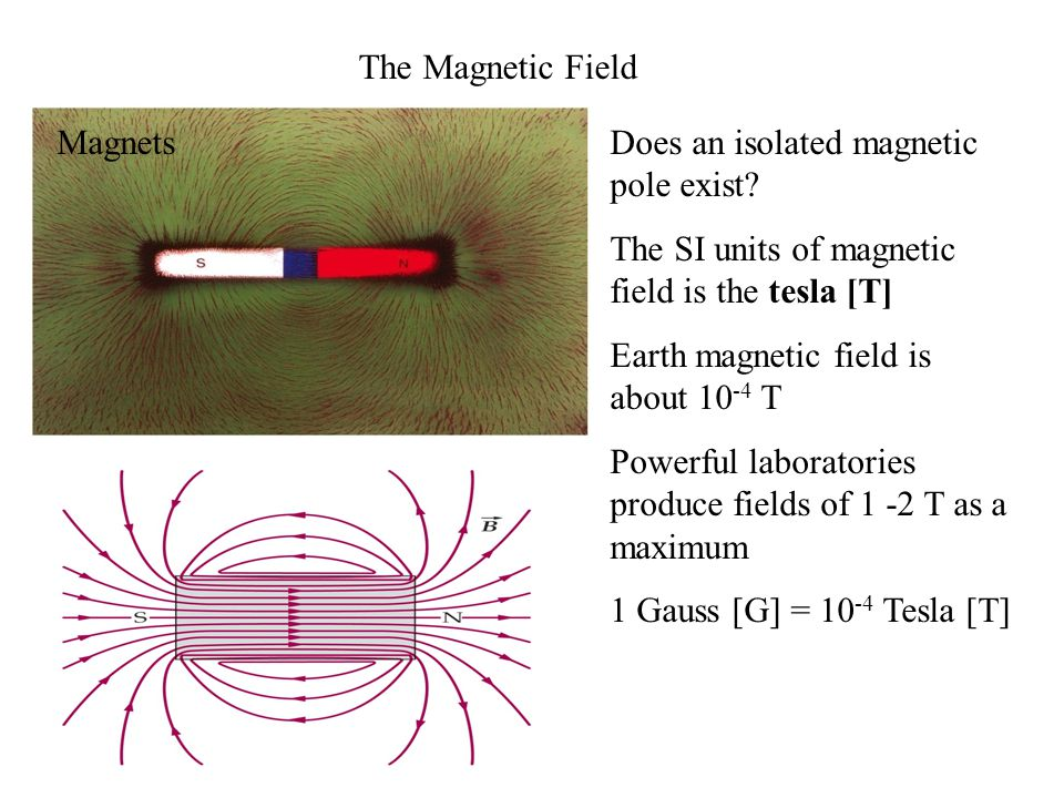 The Magnetic Field Magnets. Does an isolated magnetic pole exist The SI units of magnetic field is the tesla [T]