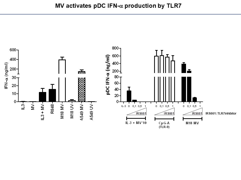 MV activates pDC IFN-a production by TLR7