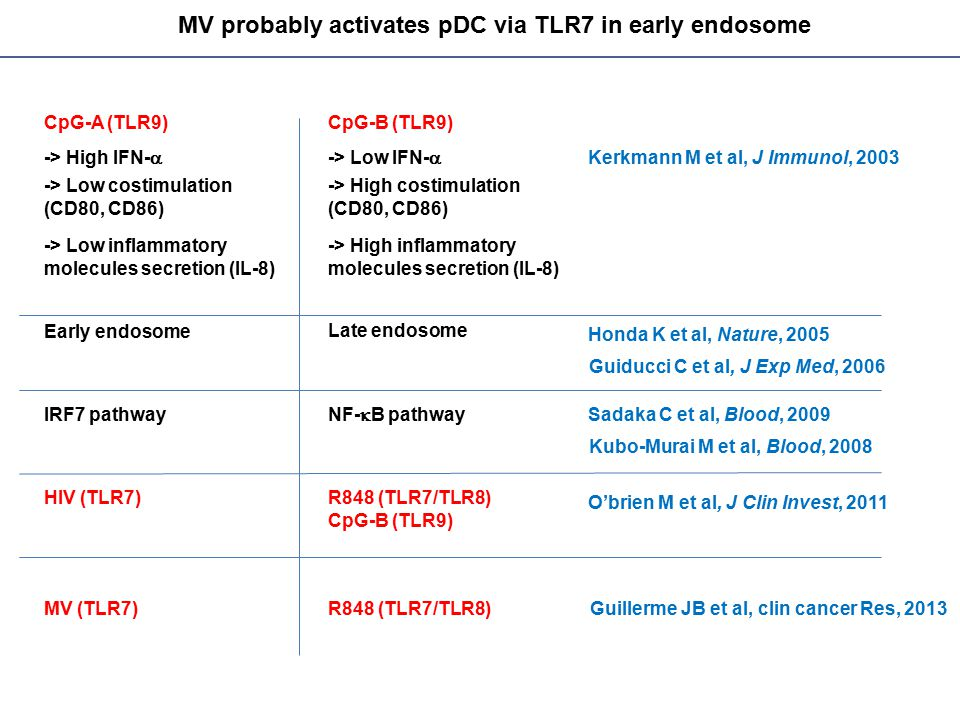 MV probably activates pDC via TLR7 in early endosome