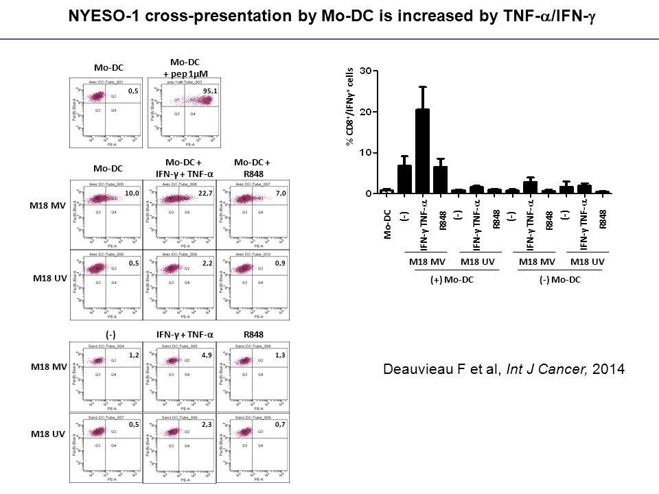 NYESO-1 cross-presentation by Mo-DC is increased by TNF-a/IFN-g