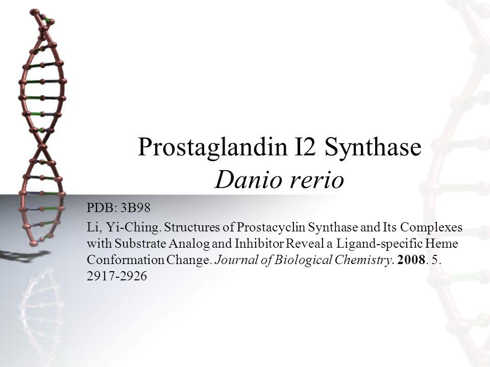 Prostaglandin I2 Synthase Danio rerio