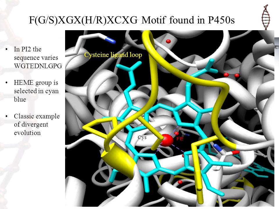 F(G/S)XGX(H/R)XCXG Motif found in P450s