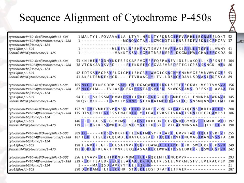 Sequence Alignment of Cytochrome P-450s