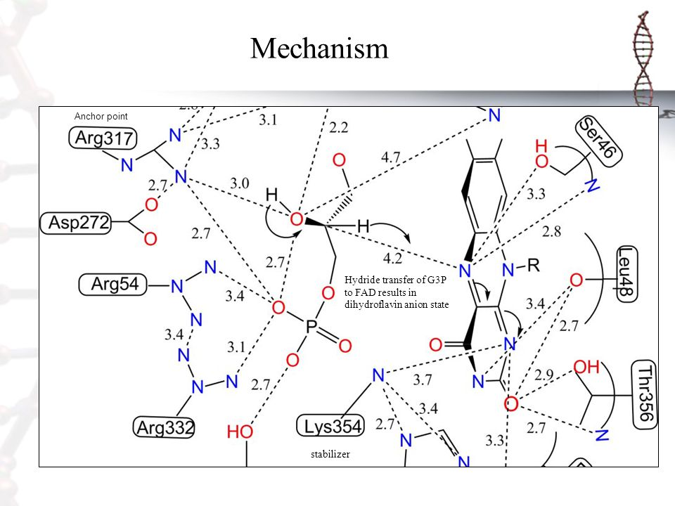 Mechanism Anchor point. Hydride transfer of G3P to FAD results in dihydroflavin anion state.