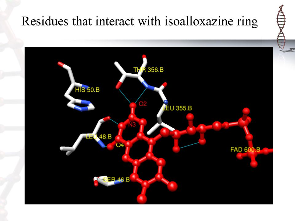 Residues that interact with isoalloxazine ring