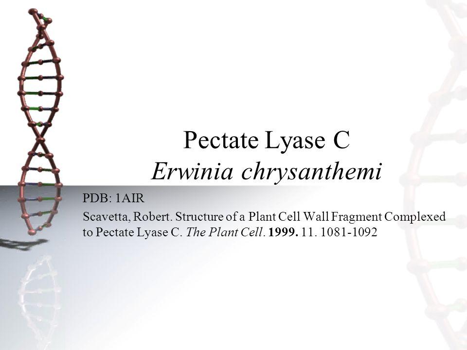 Pectate Lyase C Erwinia chrysanthemi