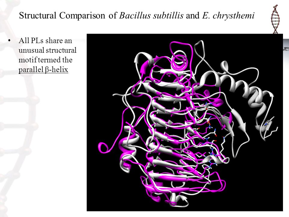 Structural Comparison of Bacillus subtillis and E. chrysthemi