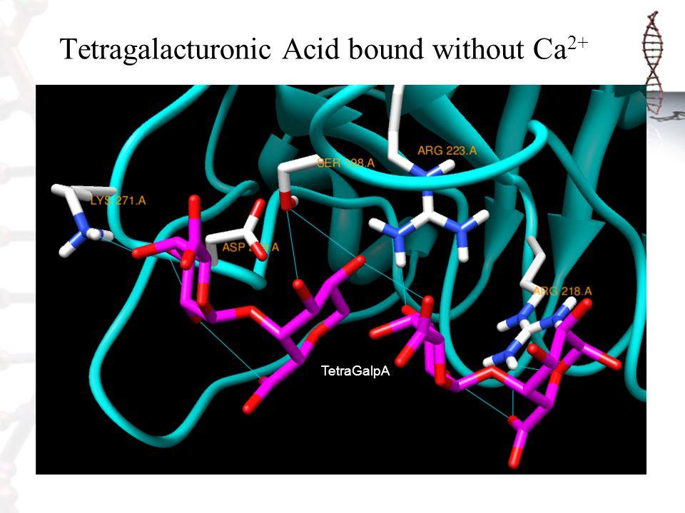 Tetragalacturonic Acid bound without Ca2+