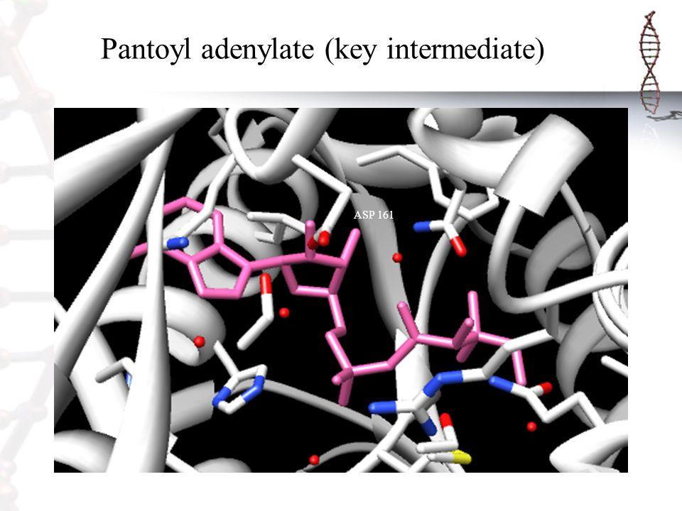 Pantoyl adenylate (key intermediate)