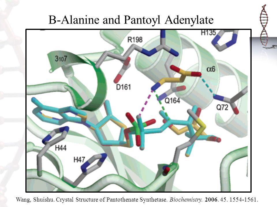 B-Alanine and Pantoyl Adenylate