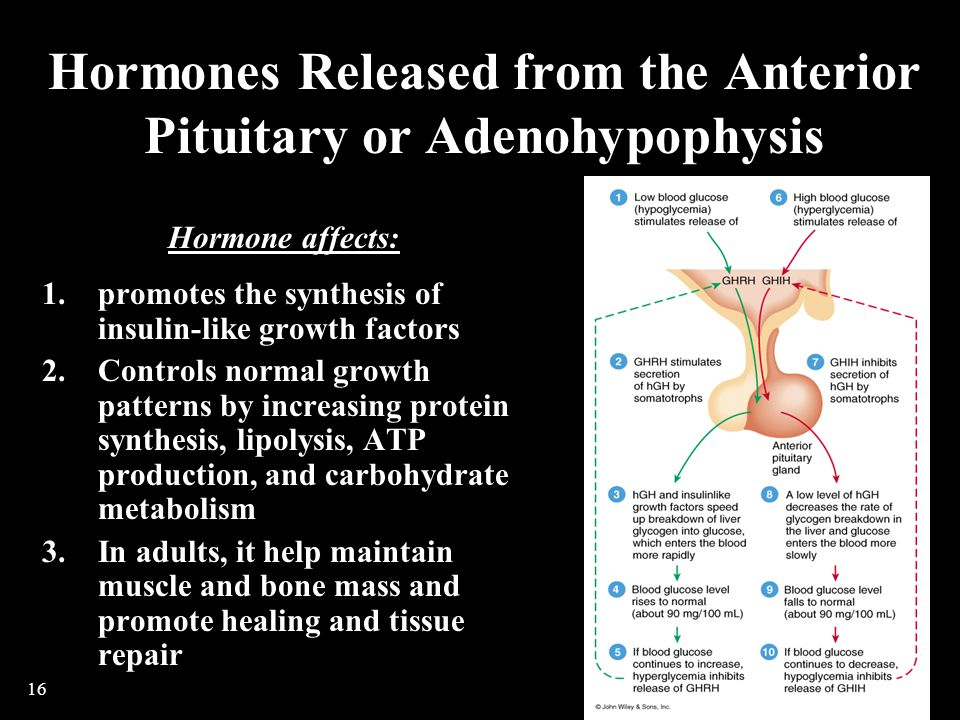 Hormones Released from the Anterior Pituitary or Adenohypophysis